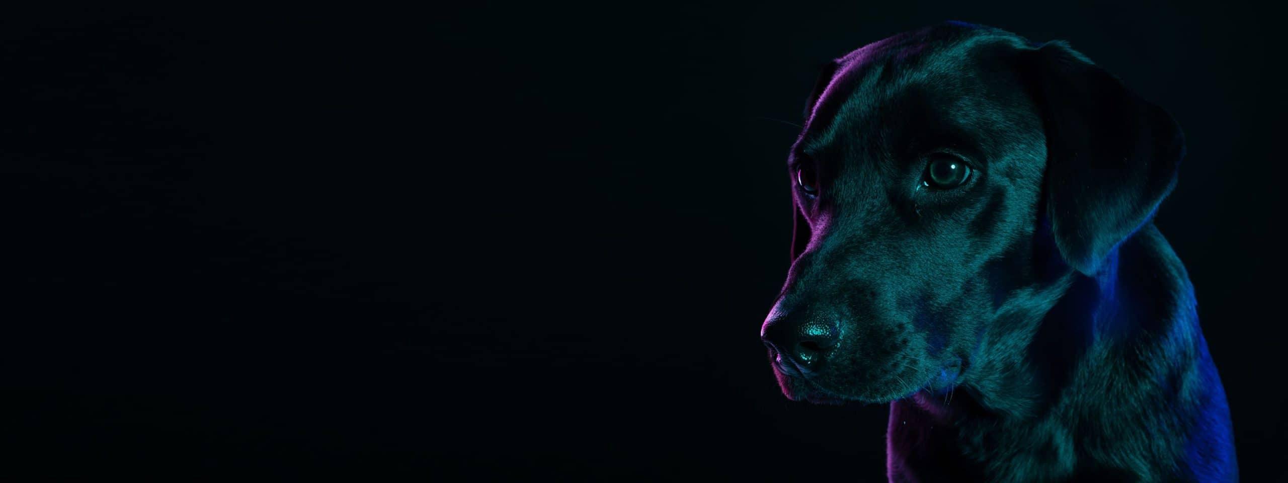 Pet Trade di qualità e vocazione formativa